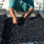 DB-Winemaking-2