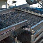 DB-Winemaking-3